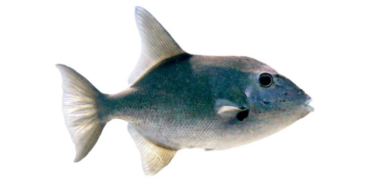 Ocean Tally Fish