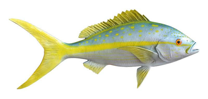 Yellowtail Snapper fish